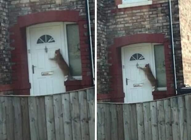 В Великобритании обнаружили самого вежливого кота