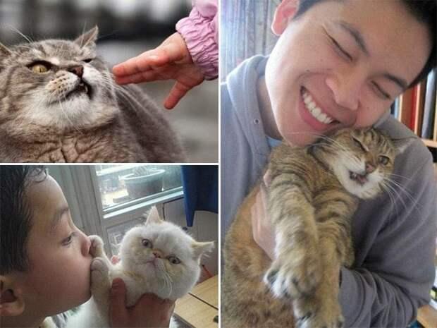 Не трогай меня! 15 котов которые терпеть не могут целоваться обниматься, без кота и жизнь не та, коты и кошки, приколы, приколы с котами, смешные коты и кошки, юмор