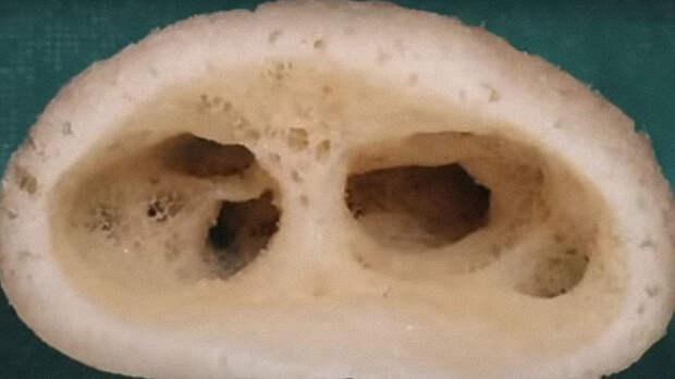 Голова подводного «инопланетянина». Изображение: кадр из видео