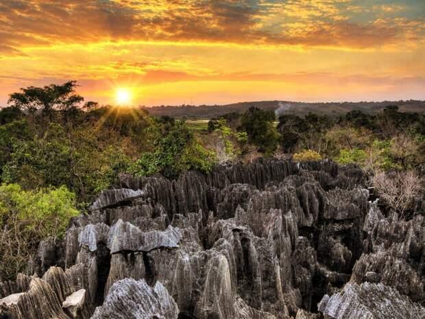 11 красивейших лесов нашей планеты, от которых захватывает дух