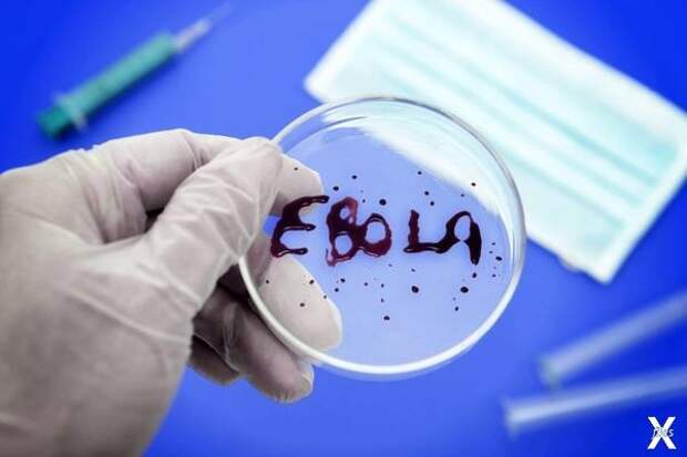 Как и эбола эпидемия «нового вирусног...