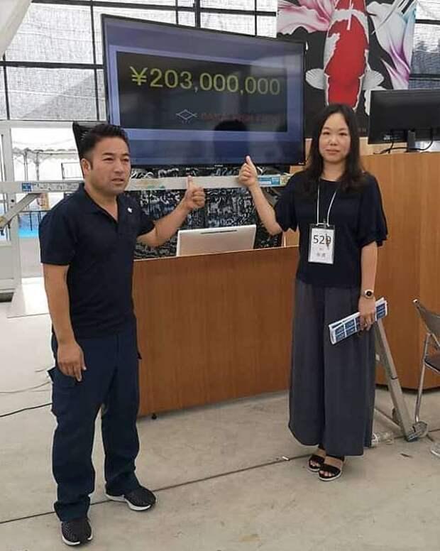 Она планирует представить знаменитую рыбу на ежегодном шоу All Japan Koi аукцион, карп кои, рекорд, рыба, торг, фото, япония