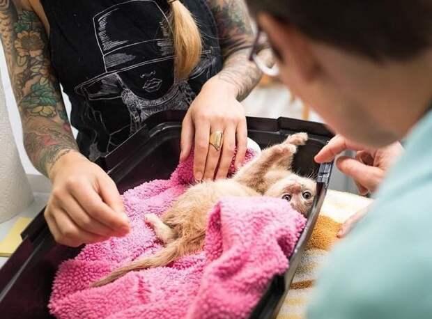 Парализованный котенок удивил всех, когда начал восстанавливаться