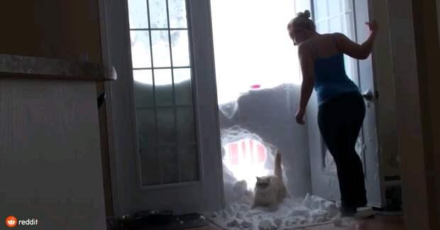 Коты на снегу – пушистые на белом. Уморительная видео-подборка приключений четырехлапых!