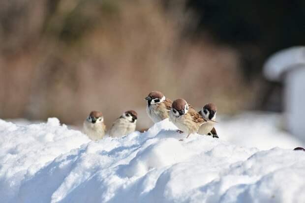 Небольшой снег и -5 градусов будет в Удмуртии 15 января