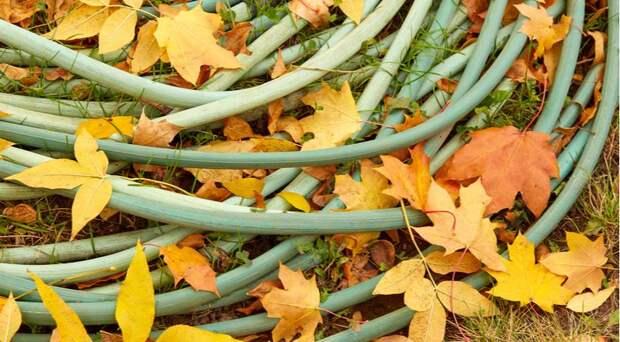 Что такое влагозарядковый полив и почему необходимо поливать растения осенью