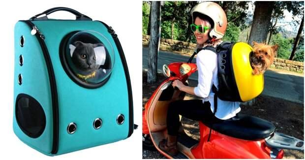 В путешествие с комфортом: прогулочные рюкзаки для четвероногих друзей
