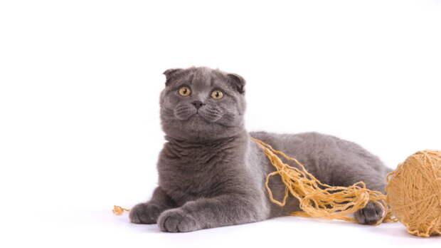 Самые активные кошки: какие породы любят игры и внимание