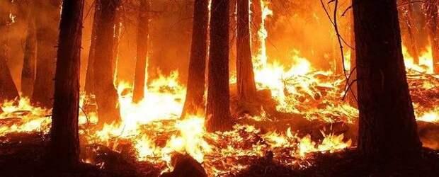 Как минимум 23 человека погибли в результате пожаров на западе США