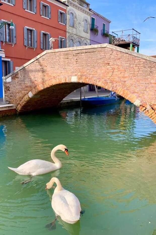 Карантин улучшил экологию — воздух над Италией и Китаем стал чище, а в Венеции появились рыбы и лебеди