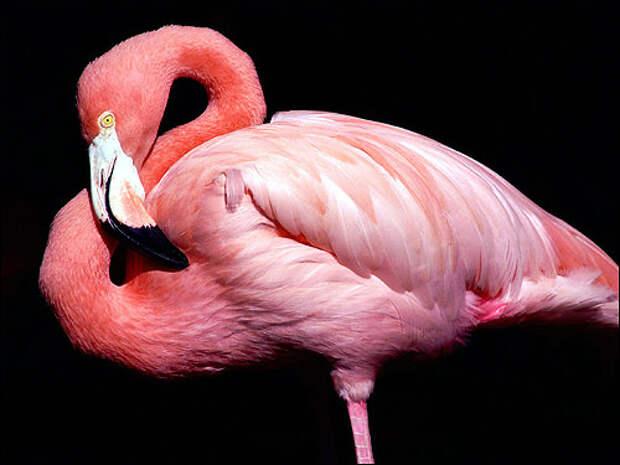 Розовые животные. Часть 3.