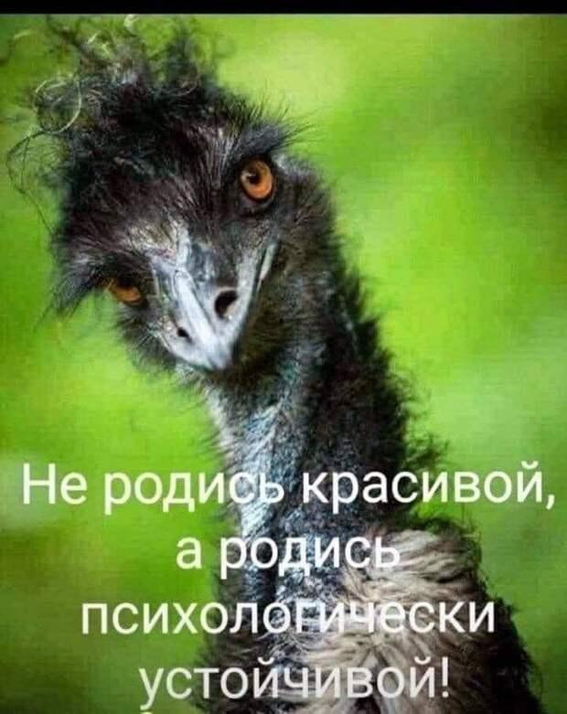 Возможно, это изображение (текст «He родись красивой, a родись психологически устойчивой!»)