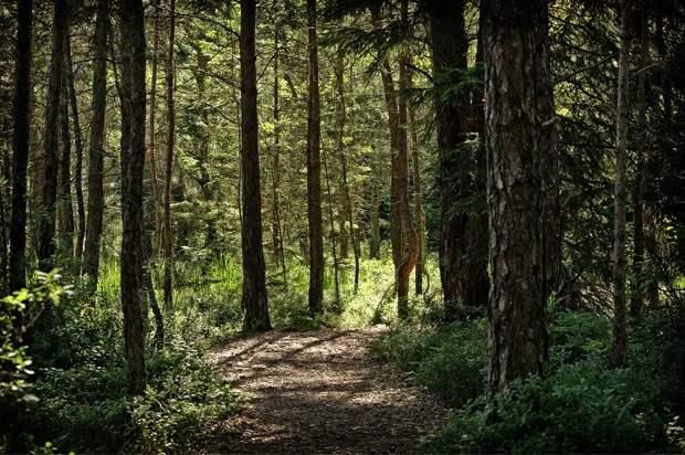 Приключенческие маршруты: что нового появится вблизи Тимирязевского леса