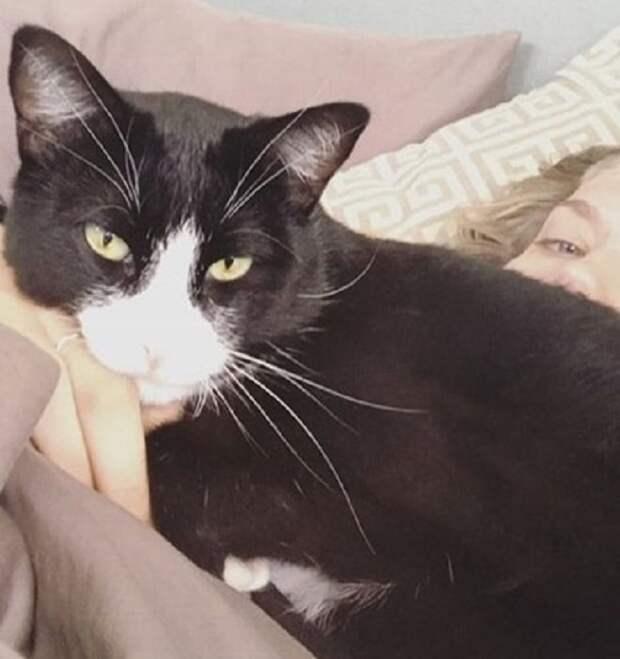 Приютский кот почувствовал, что у девушки какая-то беда, и стал утешать ее. С того момента его жизнь изменилась