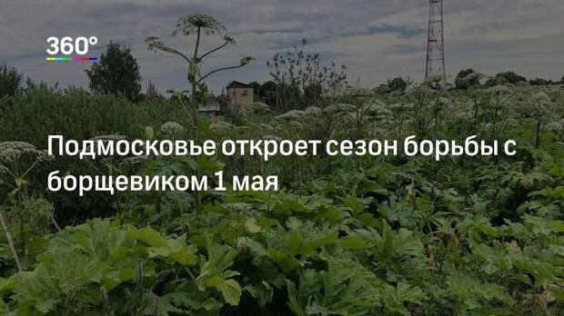 Подмосковье откроет сезон борьбы с борщевиком 1 мая