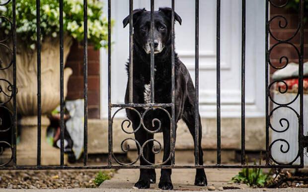 Главное, чем можно помочь стареющей собаке- быть более терпеливым и понимающим, помогать, когда она запутывается или что-то забывает. Фото PublicDomainPictures/Pixabay