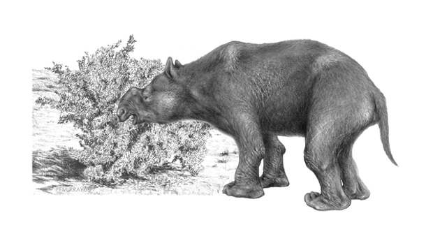 Самое крупное существовавшее на Земле сумчатое — дипротодон (Diprotodon optatum). Будучи размером с носорога, этот зверь на самом деле является родственником вомбата и коалы. Дипротодоны были полностью истреблены древними охотниками. Изображение с сайта www.physorg.com