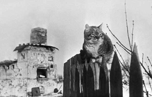 Шерсть дыбом: какие необычные способности проявляли животные во время войны