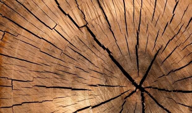 Стали известны подробности гибели уральского дровосека из-за упавшей сосны