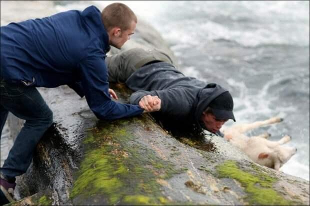 Маленький ягненок поскользнулся на камнях и упал в воду