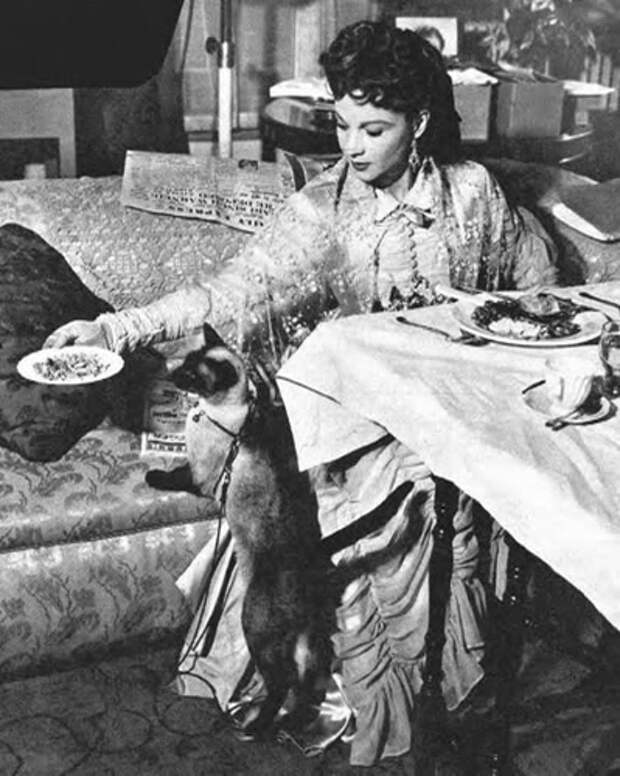 Вивьен Ли и ее кошки