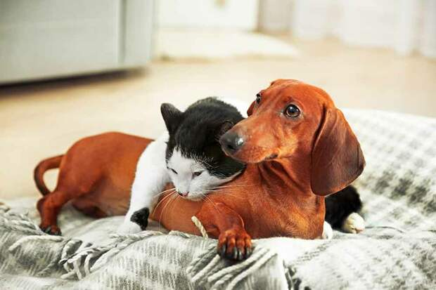 Фото: https://aristopet.com/aristopeters/perros-gatos-nuevo-programa-tv/?add-to-cart=72224