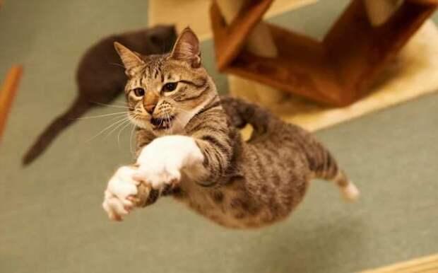 Прикольные фотографии котиков. Кити кити юмор. Подборка milayaya-cat-milayaya-cat-33220320102020-4 картинка milayaya-cat-33220320102020-4