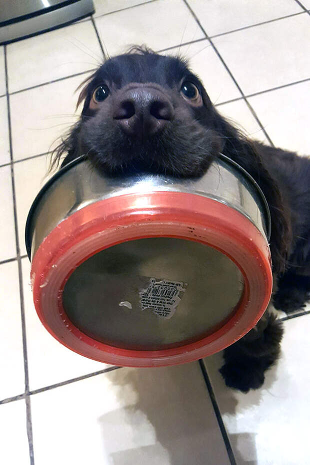 Собачки, которые готовы на все, чтобы уталить свой голод