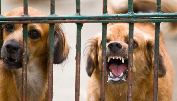 Карантин по бешенству животных отменили в ряде деревень в Подольске