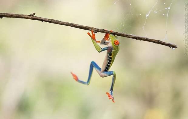 Frogs11 Оригинальные лягушки