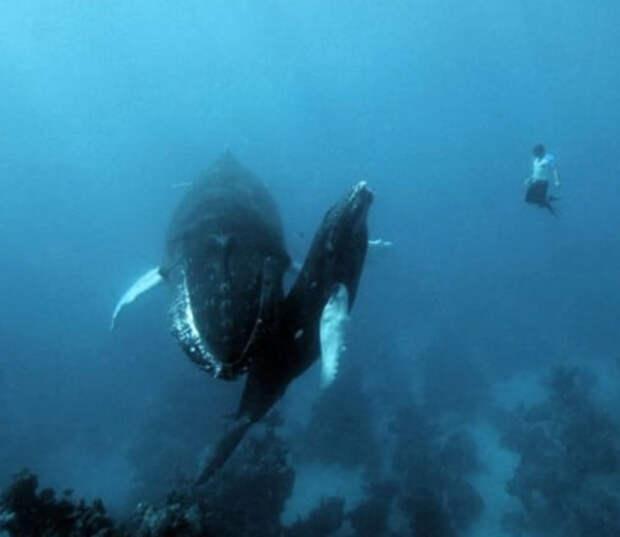 Фотографии, заставляющие до дрожи бояться моря