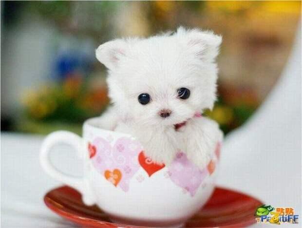 Милые собачки / Cute dogs - Muz4in.Net