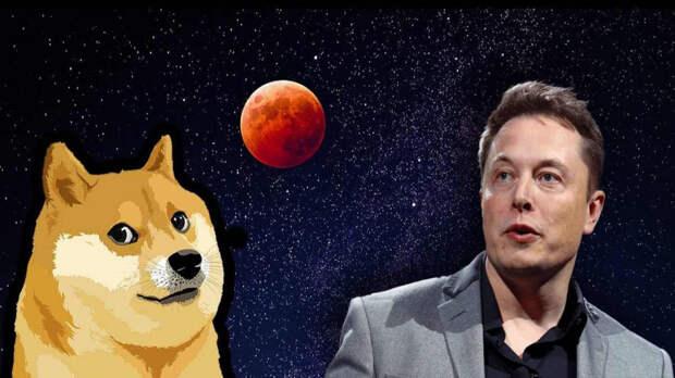 Dogecoin взлетает вверх с космической скоростью с недельным приростом в 520%, и все из-за твита Илона Маска: Dogecoin лает