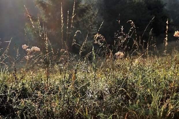 На некоторых участках Тамбовской области не убирали сухую траву в пожароопасный период