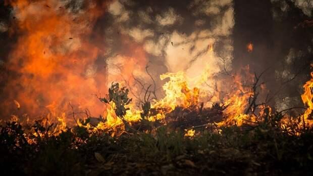 В Тюменской области ввели режим повышенной готовности из-за лесных пожаров