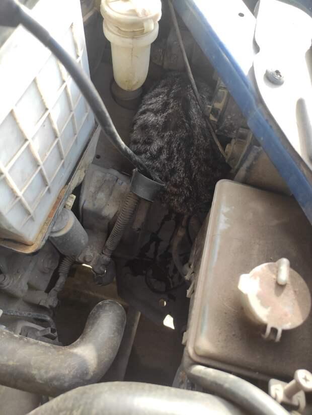 В Крыму кот катался по городу под капотом машины и чудом не погиб