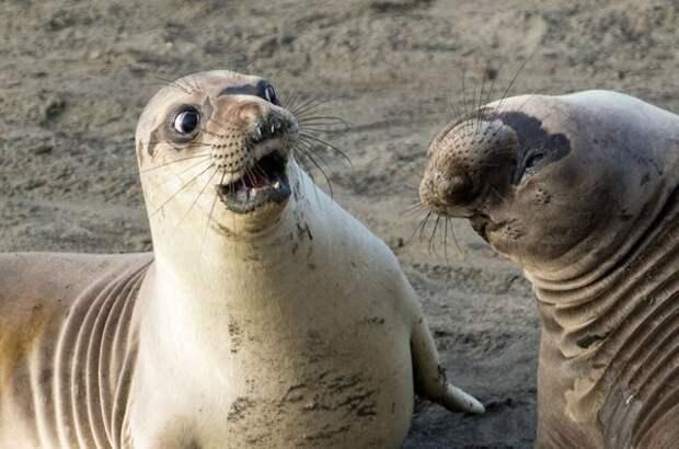 Дикие животные, случайно сфотографированные в дикой природе.