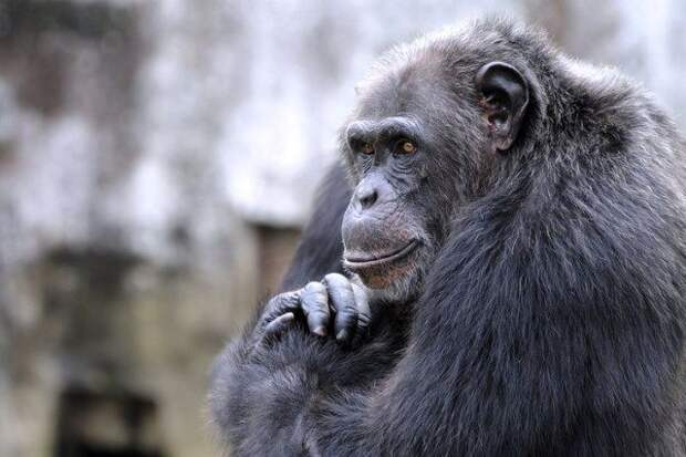 7 животных-интеллектуалов
