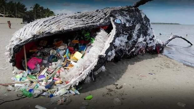 Экологическая катастрофа: Животы большинства китов забиты пластиком