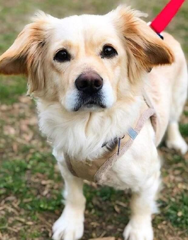 В грязном захудалом приюте было не менее 200 собак. Среди них была и бедняжка, которая страдала от болезни