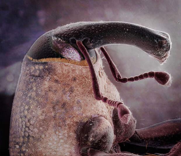 Не узнаю вас в гриме: необычные портреты знакомых насекомых