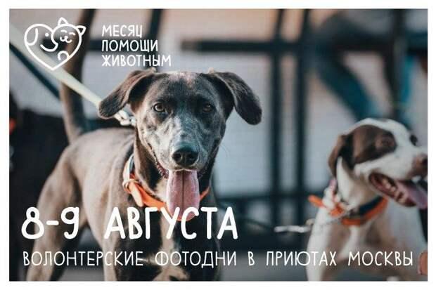 8 и9августа московских приютах для животных пройдут волонтерские «фотодни»
