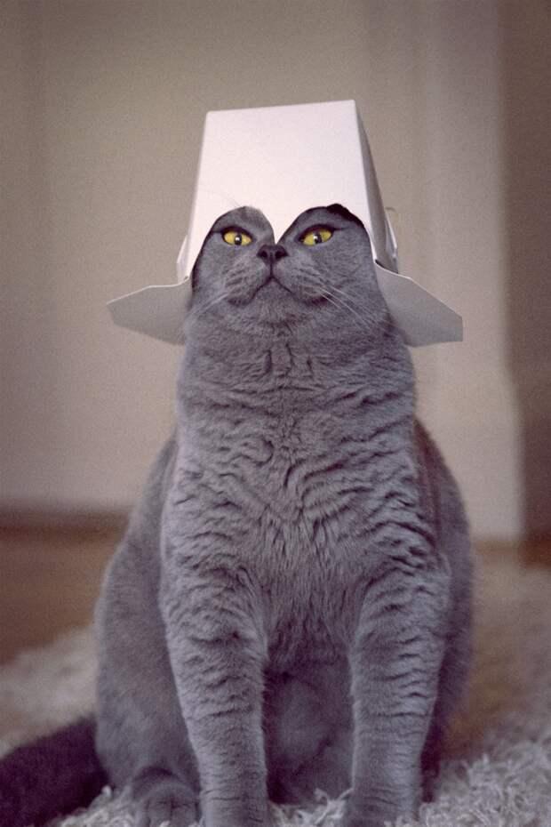 Фотографии, которыми коты могут гордиться