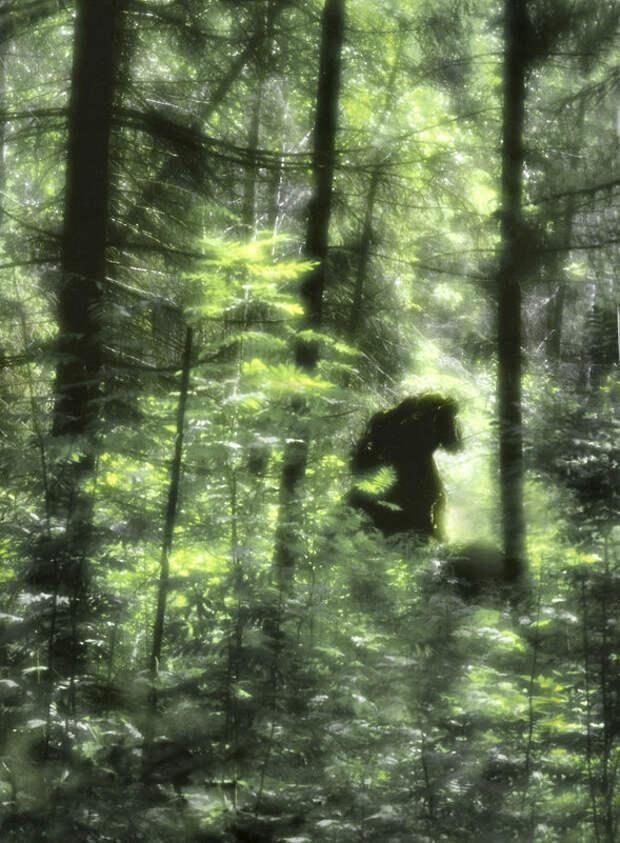 Хозяин леса - не всегда медведь...