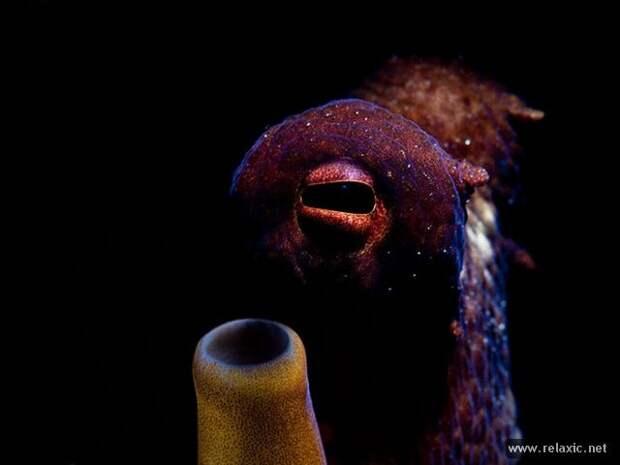 underwater_049