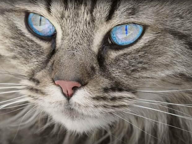 Россиянка отсудила 340 тысяч рублей за умершего кота по кличке Пуфи