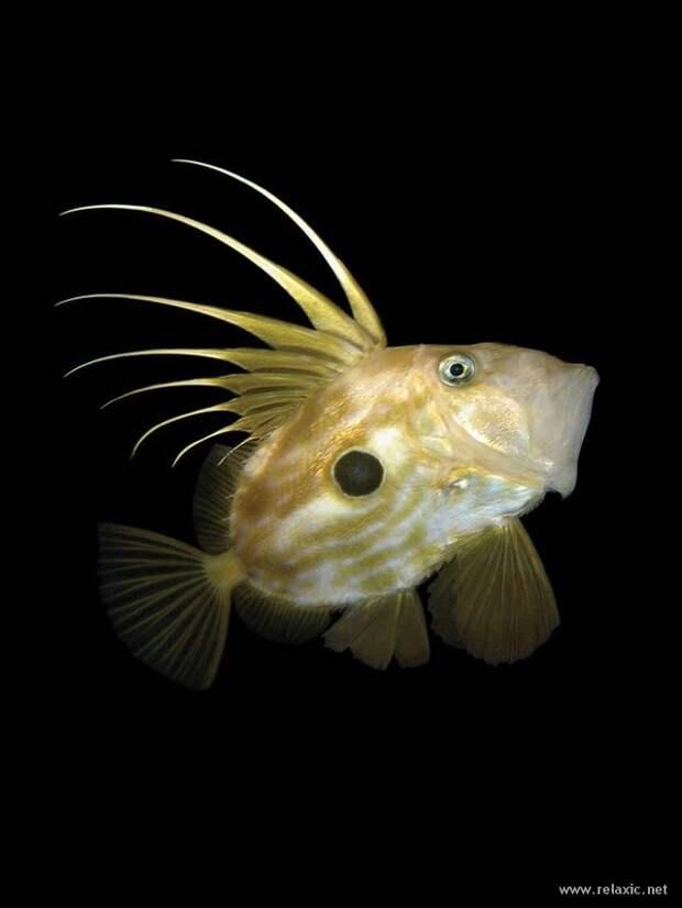 underwater_007