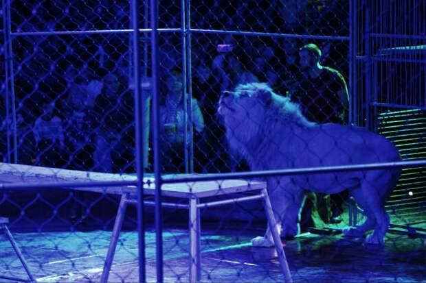 Как дисептиконы под Артура Пирожкова танцевали: шоу цирка CROCUS в Уссурийске
