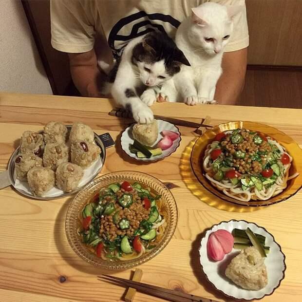 Не обижайтесь, на той неделе и вам сладкое достанется дегустация, еда, животные, кот, коты, позитив, реакция, юмор