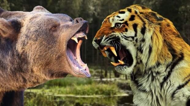Почему медведь сильнее любого льва и тигра